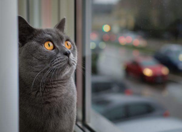 okna pcv poznań